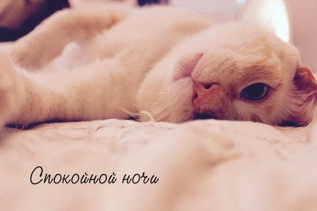 Картинки «спокойной ночи, сладких снов» прикольные