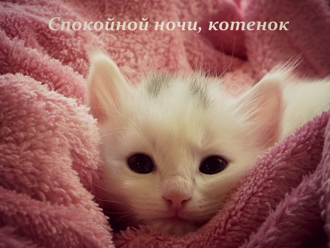 «Спокойной ночи, котенок»: картинки