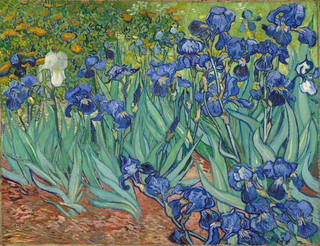 Винсент Ван Гог: произведения Ирисы (1889)