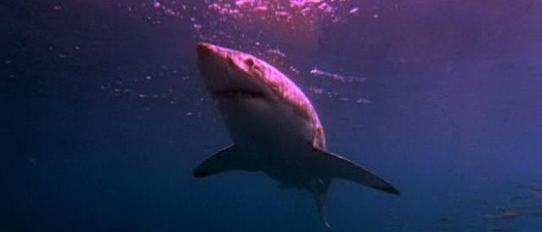 ужасы Акула в Венеции (2008)