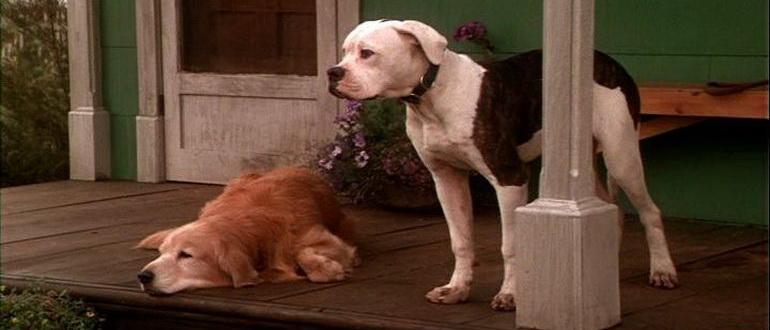 кадр из фильма Дорога домой – невероятное путешествие (1993)