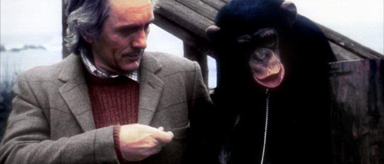 триллер Линк (1986)