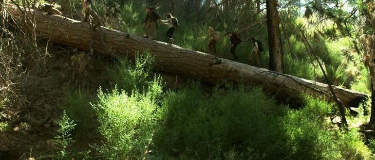 кадр из фильма Одичавшие (2017)