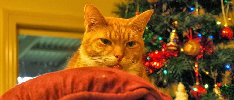 мелодрама Девять жизней Рождества (2014)