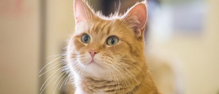 Уличный кот по кличке Боб (2016)