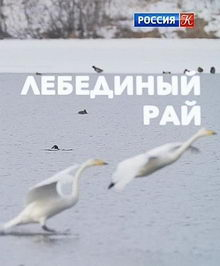 постер к фильму Лебединый рай (2019)