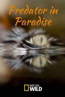 плакат к фильму Хищник в раю (2019)