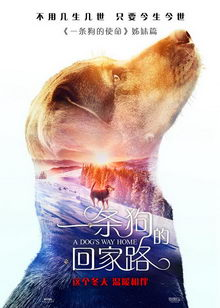 постер к фильму Путь домой (2019)