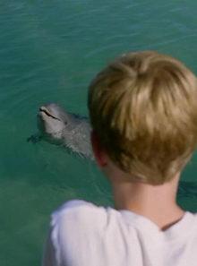 плакат к фильму Мой друг дельфин Эхо (2019)